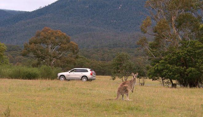 Volvo-Kangaroo